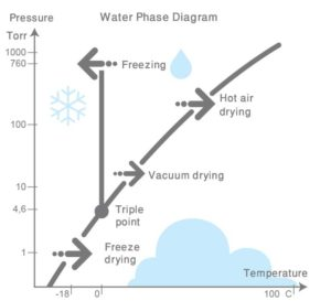 water phase diagram 300x273 - Freeze-dried herbs