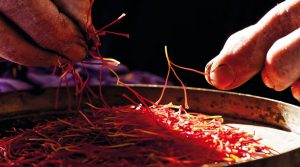 Zafferano 0007 300x167 - Saffron price