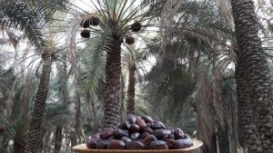 mazafati 300x169 - Iranian Dates | List Of Iranian Dates(Complete) With Features