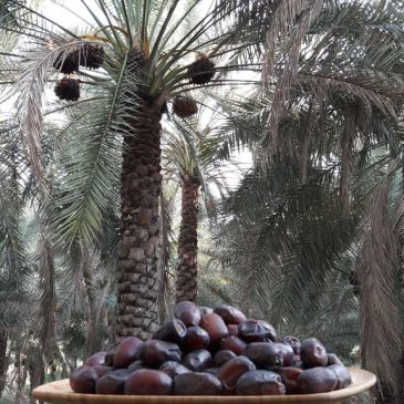 Iranian Dates | List Of Iranian Dates(Complete) With Features