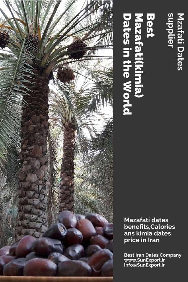 Best Mazafati Dates and Pop Culture Page 1 - Best-Mazafati-Dates-and-Pop-Culture_Page_1