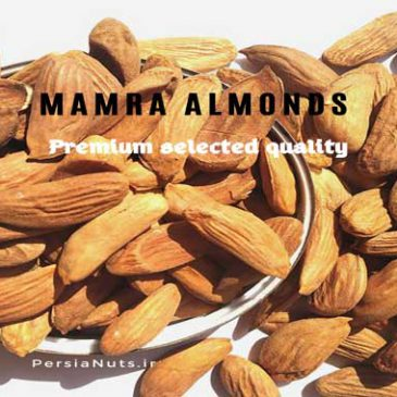 Mamra badam(almond) benefits for brain