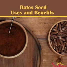 Date seed benefits and uses